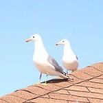 300px-Seagulls